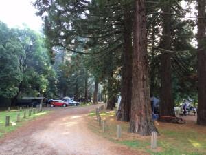 Forrest Stevensons Falls
